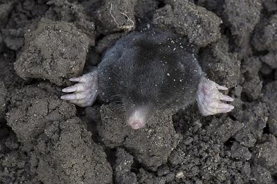 Xi Is The Mole!